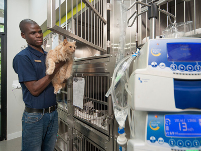 Cat Ward - our feline patients get their own ward equipped just for them