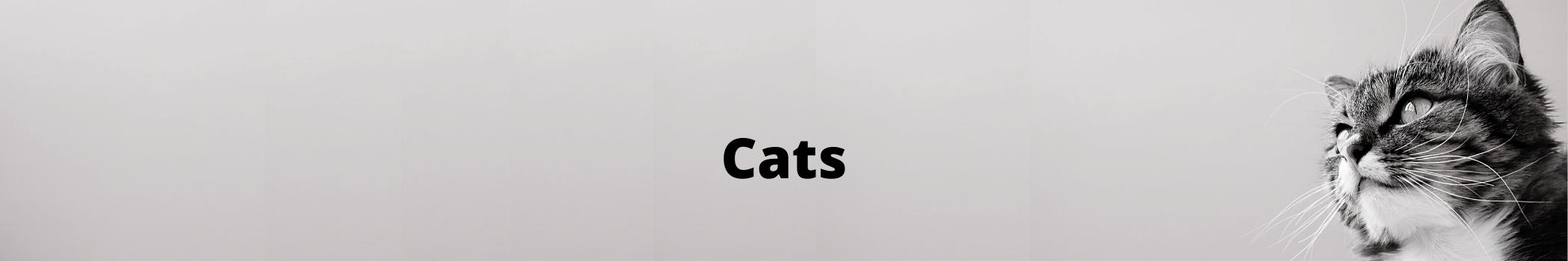 VFAH Cats Info Heading